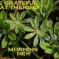Grateful Dew by Ben Upham