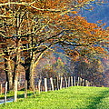 Grateful Drive In Fall by Susie Weaver