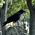 Graveyard Bird On Top Of A Tombstone by Gothicrow Images