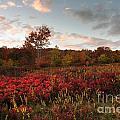 Graveyard Fields 2010 by Matthew Turlington