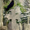 Graveyard Occupant by Gothicrow Images