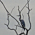 Gray Bird by Minding My  Visions by Adri and Ray