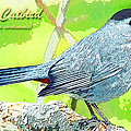 Gray Catbird Digital Art by A Gurmankin