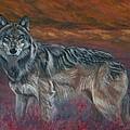 Gray Wolf by Tom Blodgett Jr