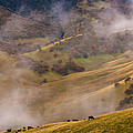 Grazing Above The Fog by Marc Crumpler