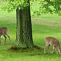 Grazing by Aimee L Maher ALM GALLERY