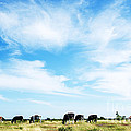 Grazing Cattle by Kennerth and Birgitta Kullman