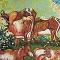 Grazing Cows by Stefan Duncan