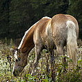 Grazing Days by Annette Persinger