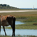 Grazing Horse And Sailboat On Cumberland Island by Bruce Gourley