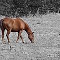 Grazing Horse by Erik Dunn