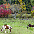 Grazing Horses Autumn Pasture Along The Blue Ridge Parkway Nc by Terry DeLuco