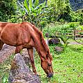 Grazing In Paradise by Jim Thompson