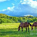 Grazing In Paradise by Roselynne Broussard
