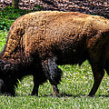 Grazing In The Grass by Robert L Jackson