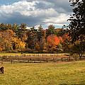 Grazing On The Farm by Joann Vitali