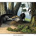 Great Anteater by Splendid Art Prints