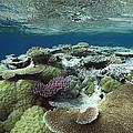 Great Barrier Reef Near Port Douglas by Flip Nicklin
