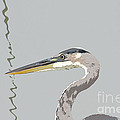Great Blue Heron And Rushes by Bob and Jan Shriner
