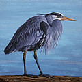 Great Blue Heron by Crista Forest