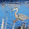 Great Blue Heron by Crystal Wightman