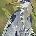 Great Blue Heron by Dan Miller