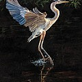 Great Blue Heron by David Stribbling