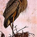 Great Blue Heron by Debra and Dave Vanderlaan