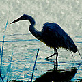 Great Blue Heron Fishing In The Low Lake Waters by Jeelan Clark