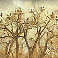 Great Blue Heron Hangout Fine Art by James BO  Insogna