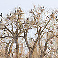 Great Blue Heron Hangout by James BO Insogna