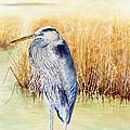 Great Blue Heron by Hannah Boynton