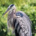 Great Blue Heron Iv by Susan Molnar