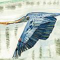 Great Blue Heron by Miriam Kalliomaki