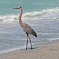 Great Blue Heron On Beach by Mariarosa Rockefeller