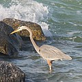 Great Blue Heron On The Prey by Christiane Schulze Art And Photography