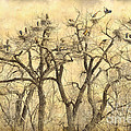 Great Blue Herons Colonies Fine Art by James BO Insogna