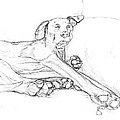 Great Dane Dog Sketch Bella by Stacey May