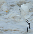 Egret Above Cloud Or Water by Dot Rambin