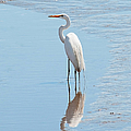 Great Egret And Reflection by Regina Geoghan