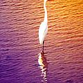 Great Egret At Sundown  by Ann Michelle Smith