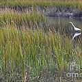 Great Egret by Diane Macdonald