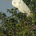 Great Egret In A Tree by Larry Allan