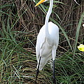 Great Egret In The Green by Christiane Schulze Art And Photography