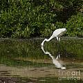 Great Egret by Luis Alvarenga