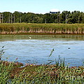 Great Egret On Berm Pond At Tifft Nature Preserve Buffalo New York by Rose Santuci-Sofranko