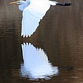 Great Egret Over The Pond by Carol Groenen
