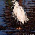 Great Egret Walking On Water by Jerry Cowart