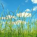 Great Fields by Art Dingo