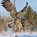 Great Gray Owl Pictures 767 by World Wildlife Photography